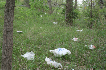 "Plastic Bags Constantly Blow Off The Rapp Road ""Landfill"" And Kill Pine Bush Vegetation {Photo Bert Schou}"
