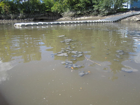 Floating Mats Of Human Waste Near Island Creek Park