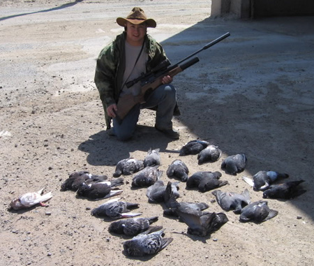 Controlling Pigeons In Northern California