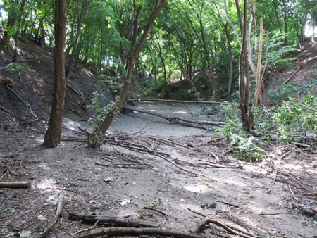 Ten Days After The Flood The Ravine In Lincoln Park Was Still A Mud Flat (Aeration Grate Behind The Fallen Tree)