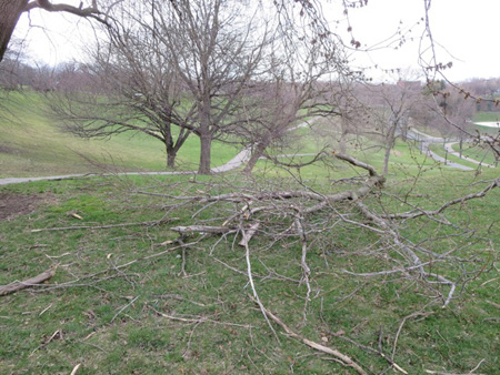 Fallen Branches In Lincoln Park