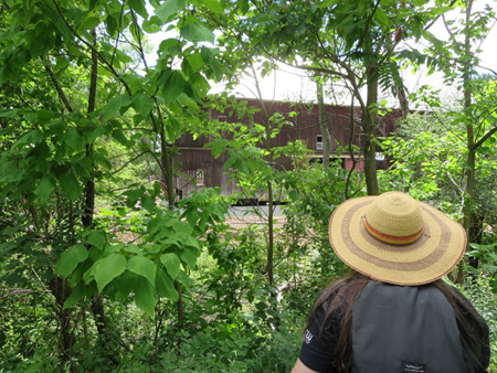 Look At The Hilton Barn From The Rail Trail About Where An Access Bridge Will Be Built