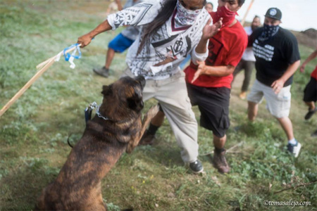 Security Guards Use Dogs To Assault Lakota Defenders Of Their Land At Standing Rock South Dakota Last Month