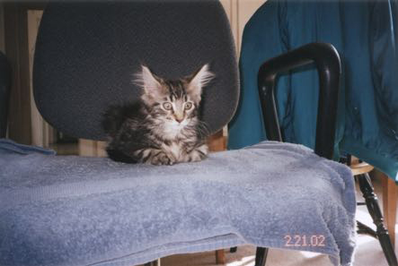 Katekka As A Kitten
