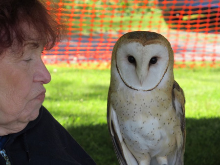 Barn Owl (On The Right) And Handler