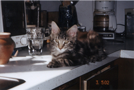 Kitchen Counter.� Note Coffee Maker Behind Cat Butt